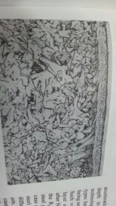 capa nitrurada